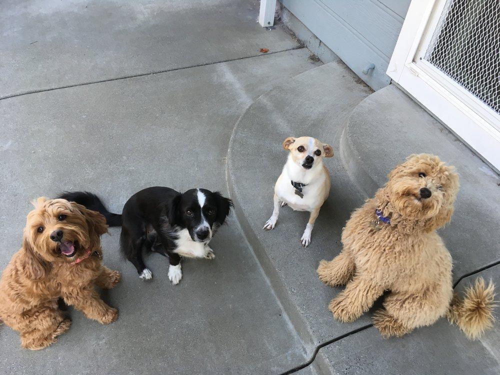 2017-9-30 Dixie, Luna, Bob & Ella.JPG