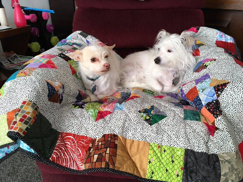 2018-4-15 Buddy & Koko.JPG