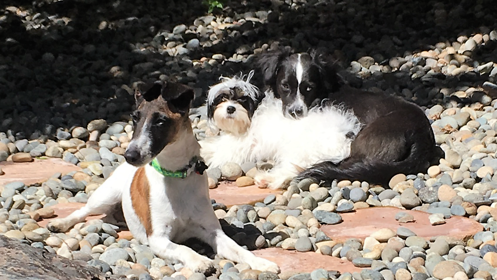 2018-4-29 Zira, Lexie & Luna.PNG