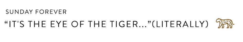 Tiger's Eye Header Copy.jpg