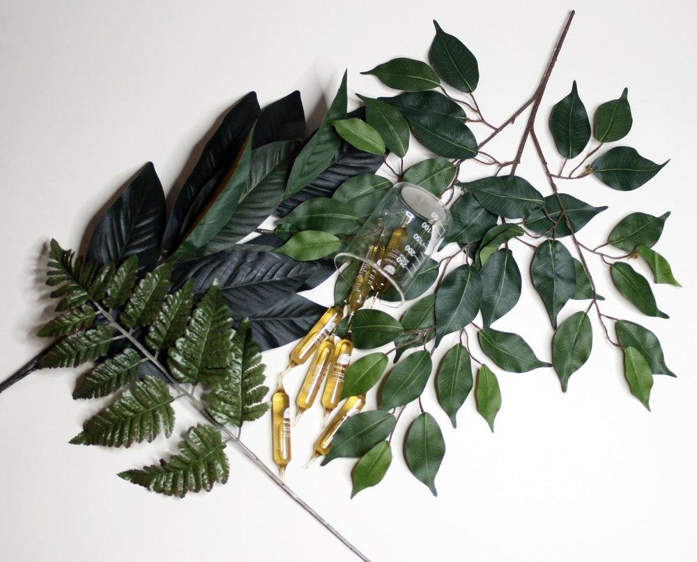 Phyto Leaf 4.jpg
