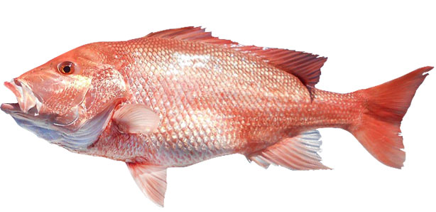 red-snapper.jpg