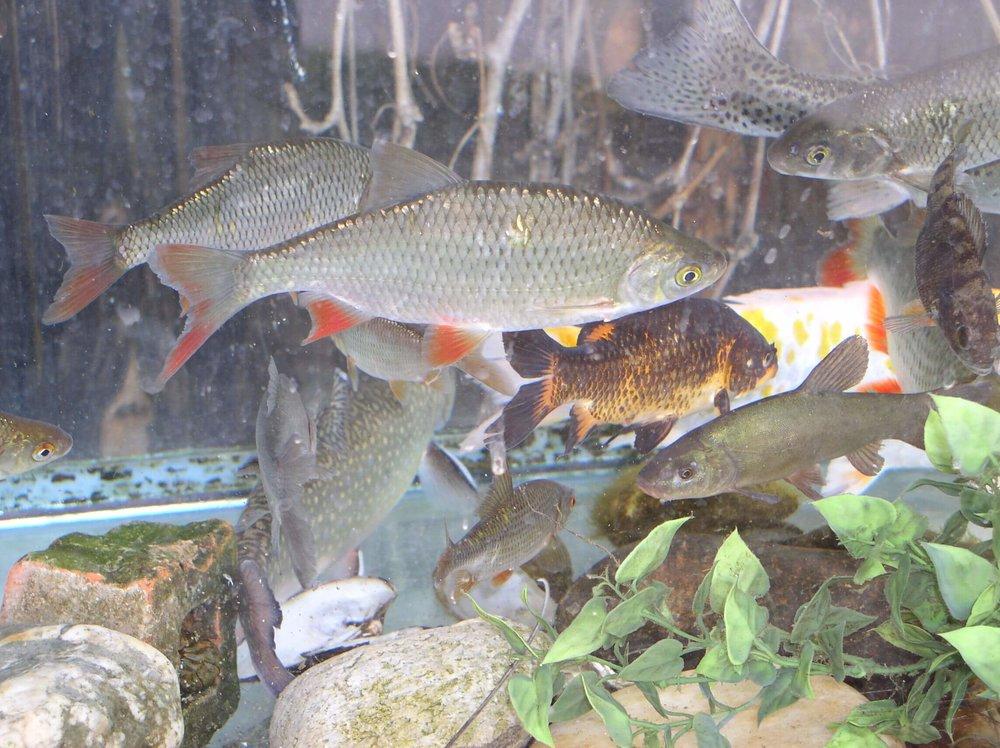 Fische-Divers-min.JPG
