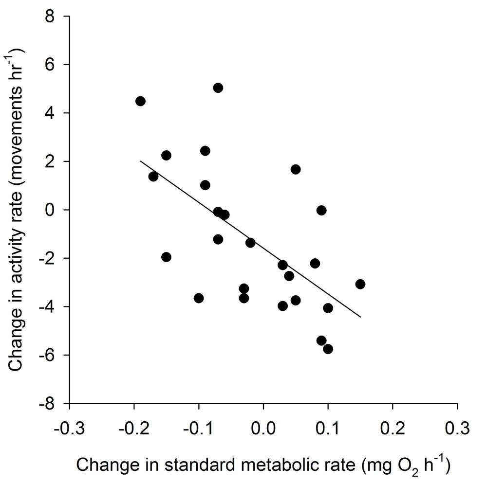 Correlation between changes in standard metabolic rate and activity rate (r = −0.63, p < 0.02) among individual juvenile brown trout ( Salmo trutta ) over a 5 week period of decreasing rations at 7.5 °C.