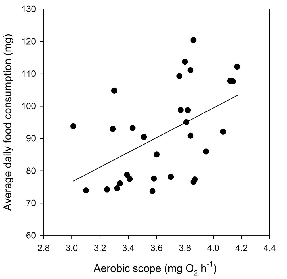 Average daily maximum food consumption as a function of aerobic scope in juvenile brown trout ( Salmo trutta ) fed  ad libitum  ( R 2 = 0.35). Plotted are partial residuals evaluated at the mean body mass (6.5 g) and standard metabolic rate (0.66 mg O2 h-1).