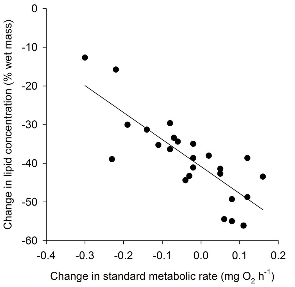 Change in lipid stores of individual juvenile brown trout ( Salmo trutta , n = 25) as a function of the change in their standard metabolic rate after 5 weeks of decreasing rations at 7.5 °C.