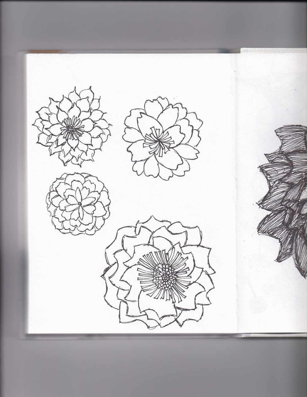 Sketches: - I started off by creating a few sketches that added that handmade unique feel to the logo. I then scanned them onto my computer and worked on them from there.