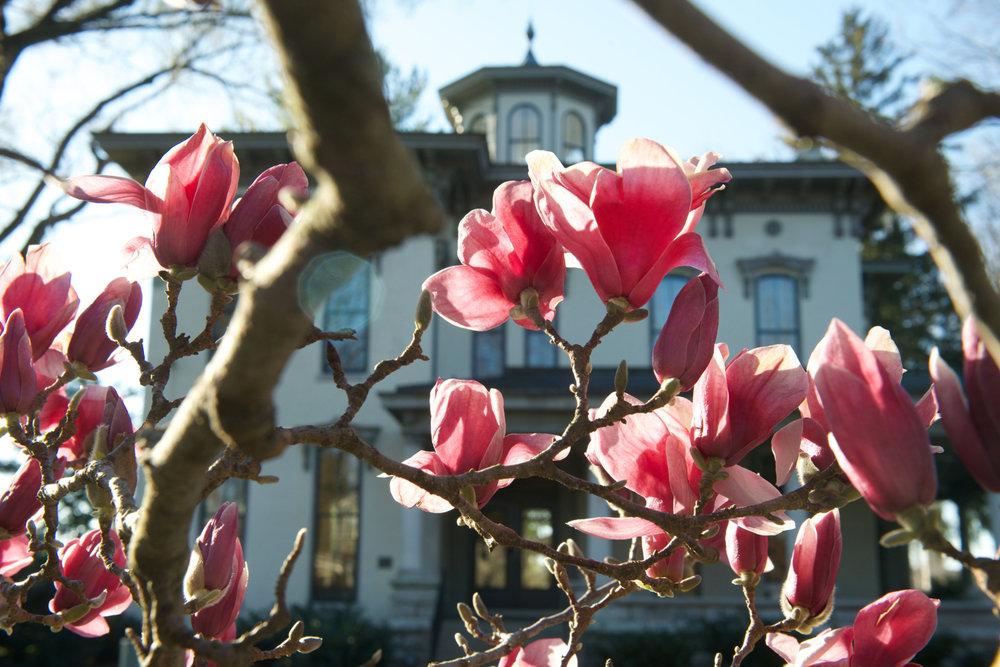 MagnoliaBlossoms.jpg