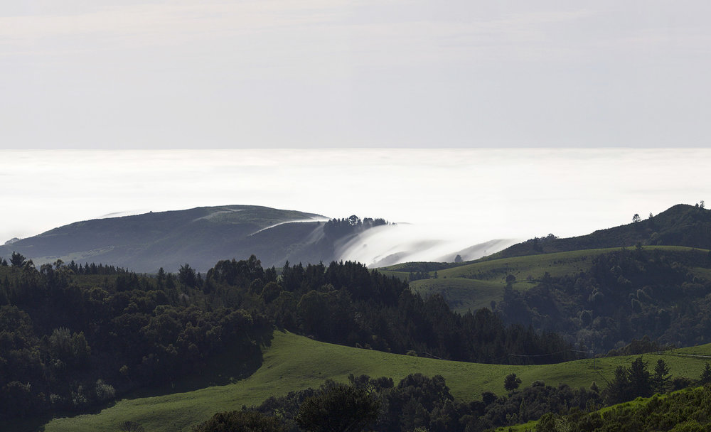 Djerassi Artist Retreat Center by Herbert Stolz