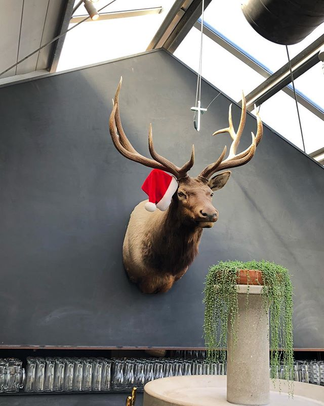 It's cold outside, but warm and festive in here 🎄☺️ Join us and Harry the Elk for $5 cocktails from 3 - 9, and $1 off drafts and $3 Becks and Heineken from 3 - 6!