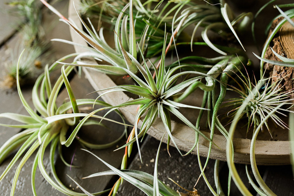 flora airplants.jpg