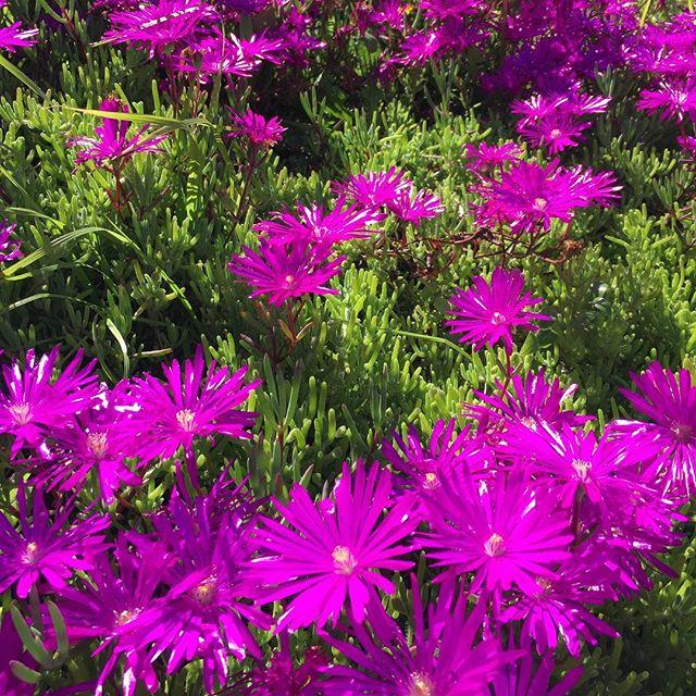Hello #spring so nice to see you again! 🌸🌺🌷#bloom #bloomin #flowers #flower #losangeles #onmywalk #nofilter #nofilterneeded