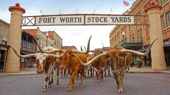 fort-worth-herd.jpg