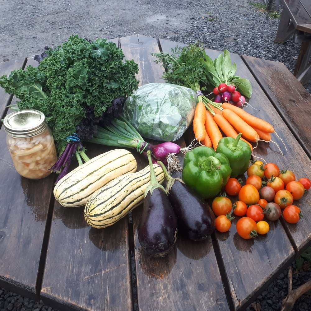 Late Season Share - Kale, Green Onion, Delicata Squash, Eggplant, Peppers, Radish, Cherry Tomatoes, Carrots, Arugula, Fermented Spicy Turnip