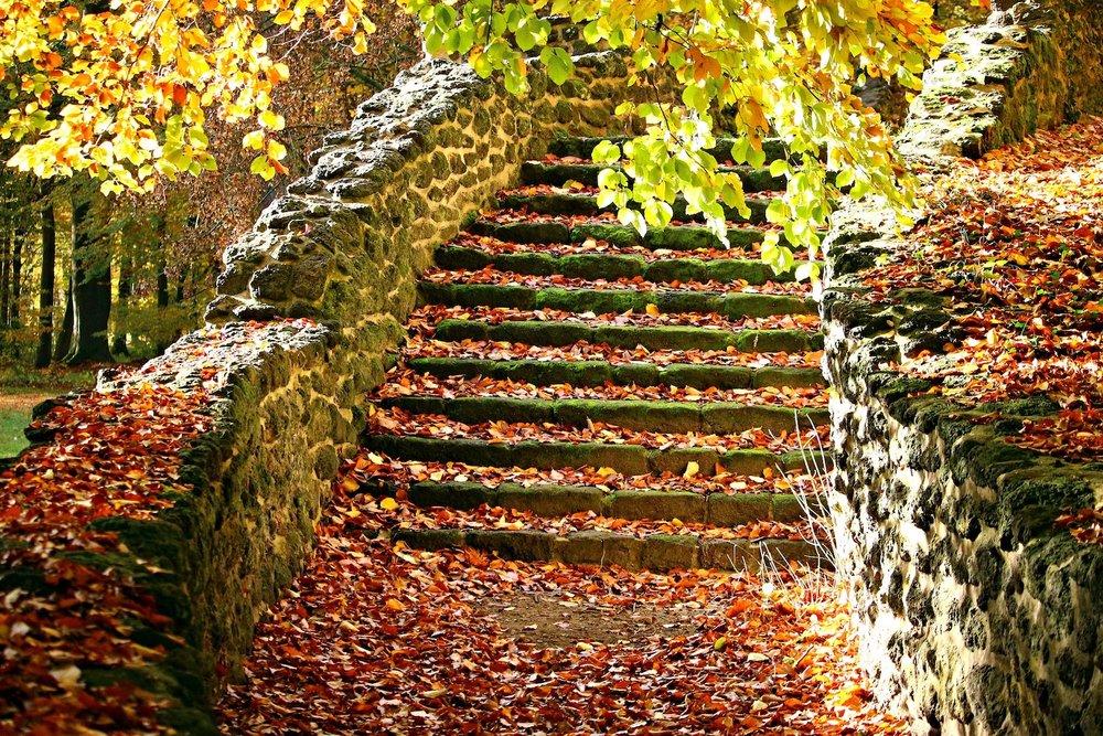 autumn-1797385_1920_web.jpg