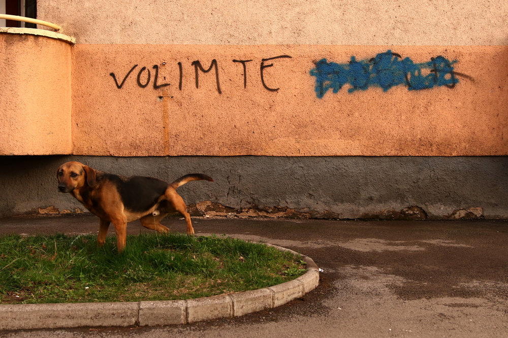 "March 20, 2017, Zenica - A stray dog is seen in front of a graffiti saying ""Volim te (I love you)."" The total number of stray dogs in Bosnia is unknown, but in Zenica there is estimated to be more than 6,000 and in Sarajevo more than 15,000."