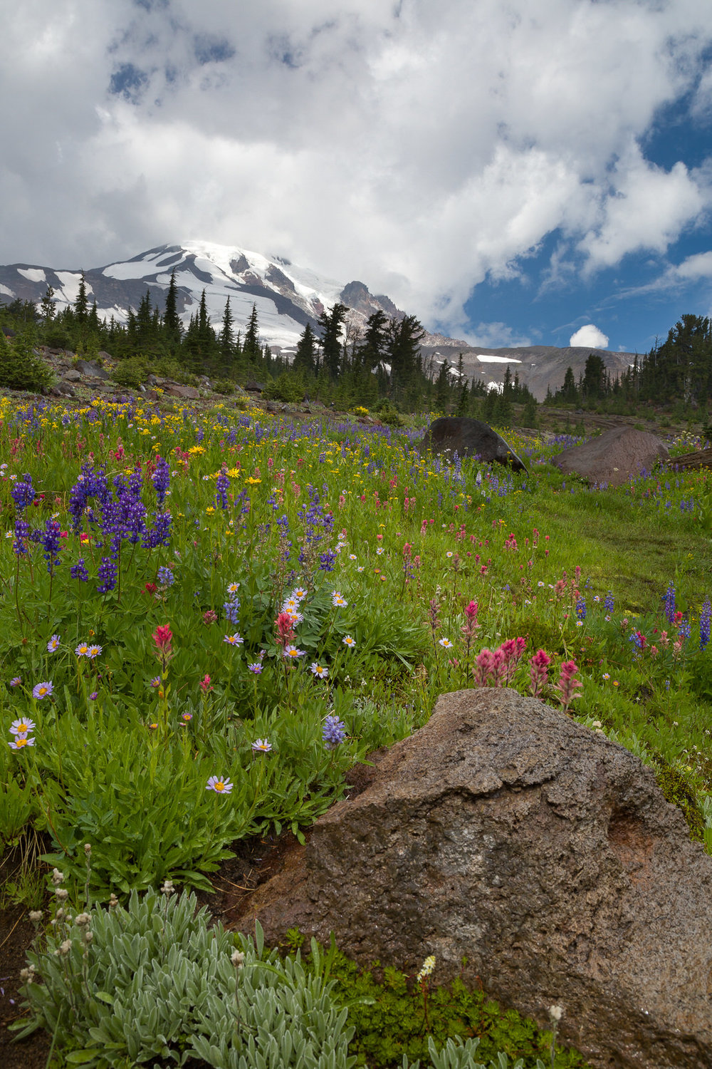 Wildflowers in Bird Creek Meadow below Mt. Adams