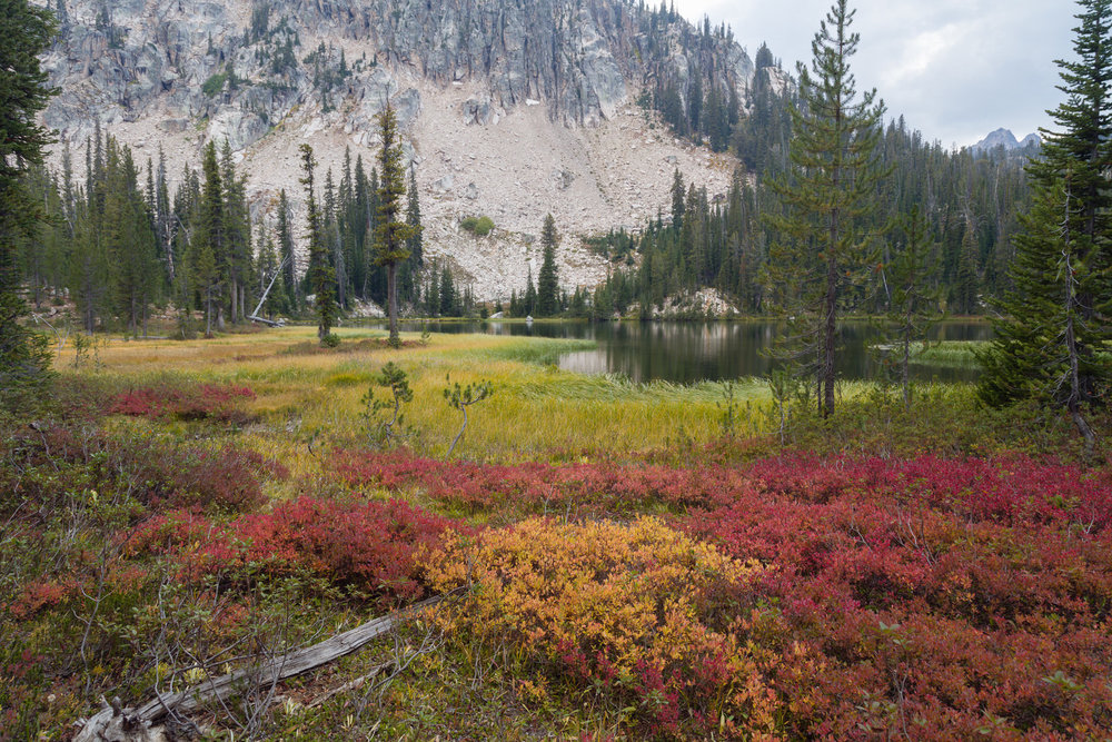 Huckleberry and marsh grass near Cramer Lake in the Sawtooths