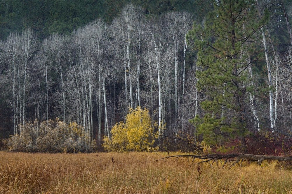 Marshy meadow along the Cascade Lakes Highway