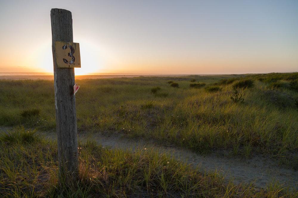 Dune grass trail on the Washington Coast