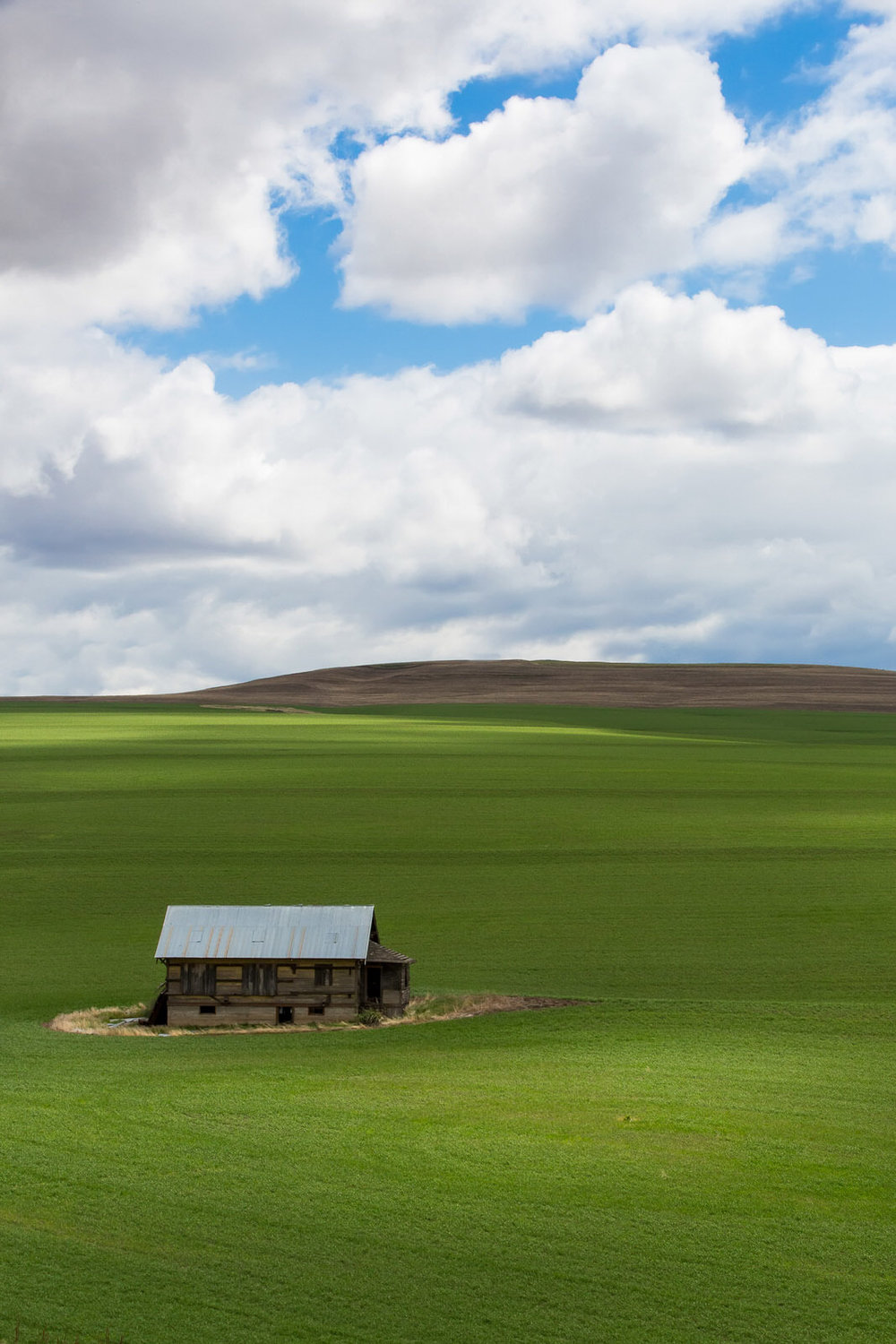 Dappled light on the lush green fields of eastern Oregon