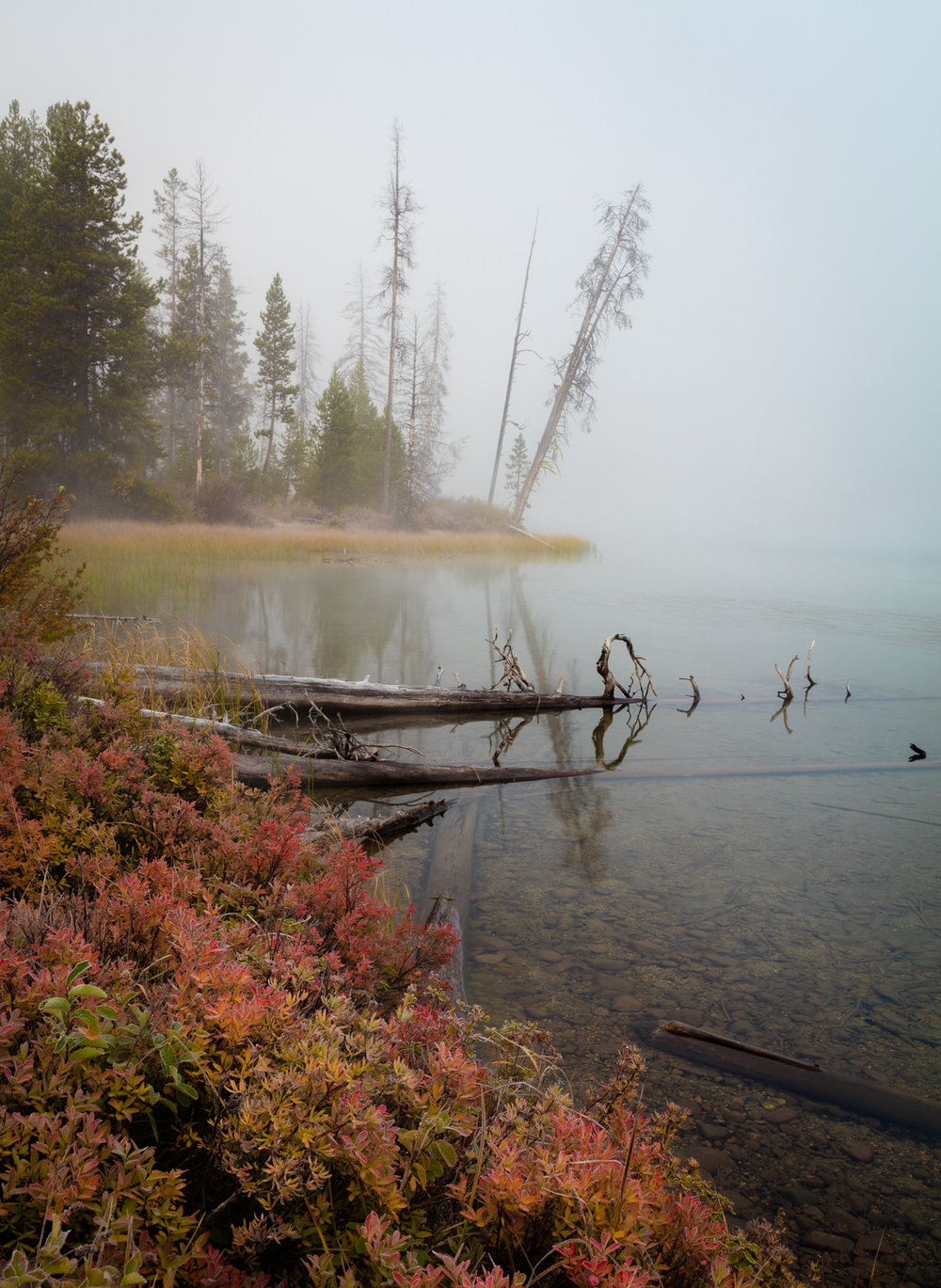 Fog and fall foliage at Little Redfish Lake near Stanley, Idaho