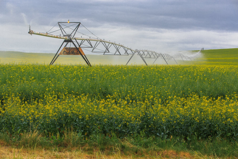 Circle Master crop irrigation over the canola fields