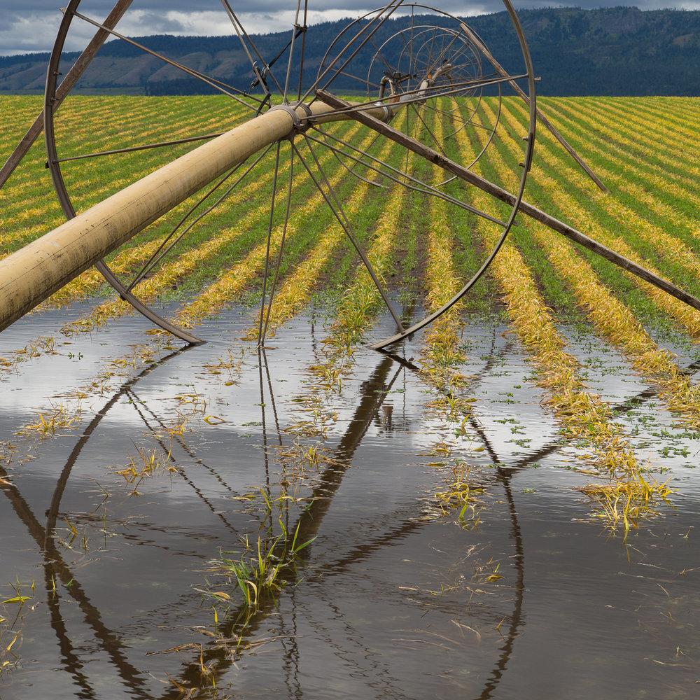 Irrigation wheel line in a field in eastern Oregon