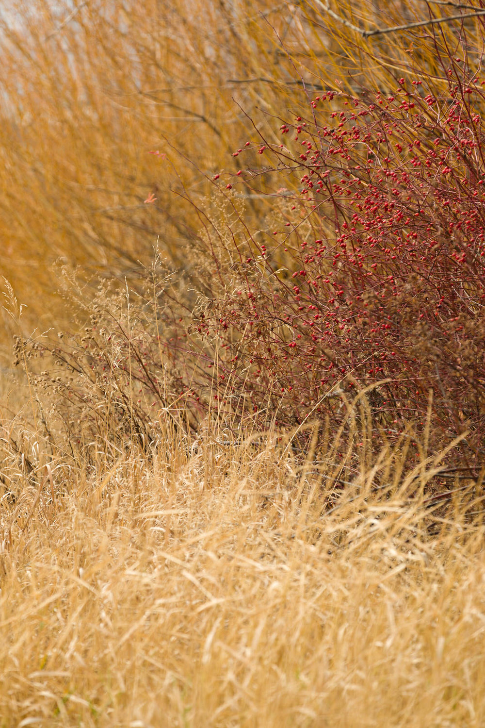 Roadside colors near Baker City