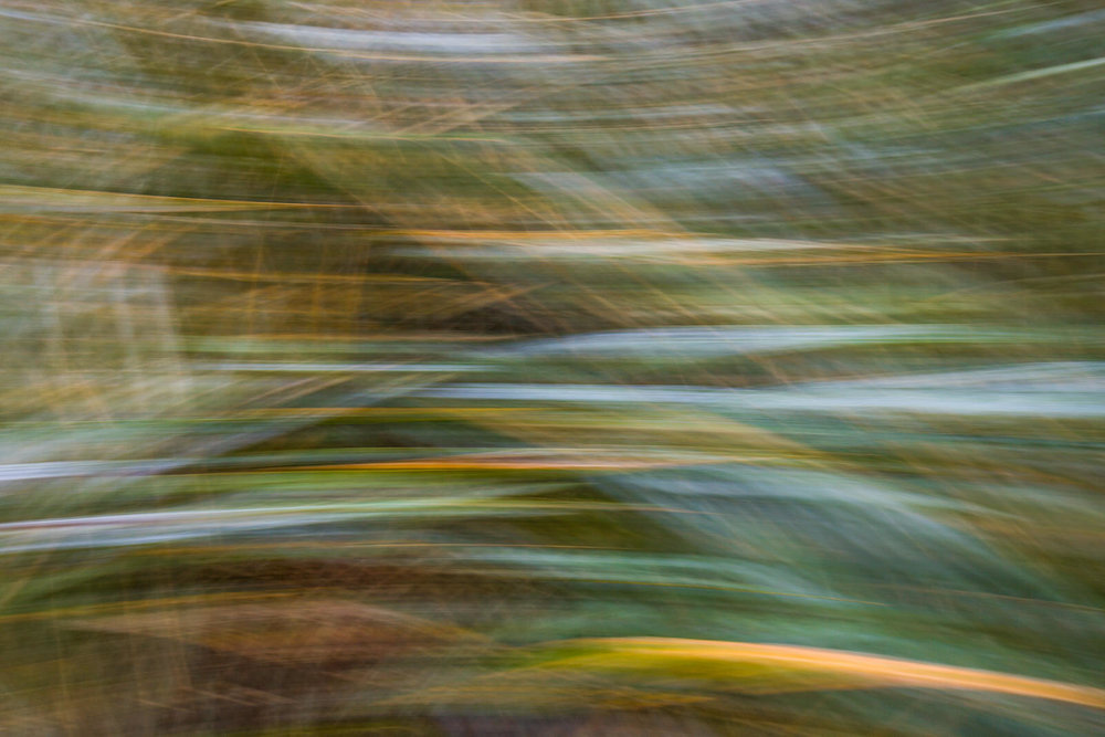 Rialto Dune Grass | Motion Blur