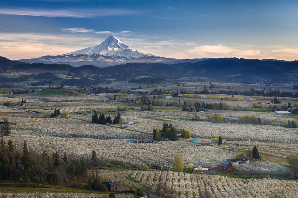 Hood River Valley in Blossom