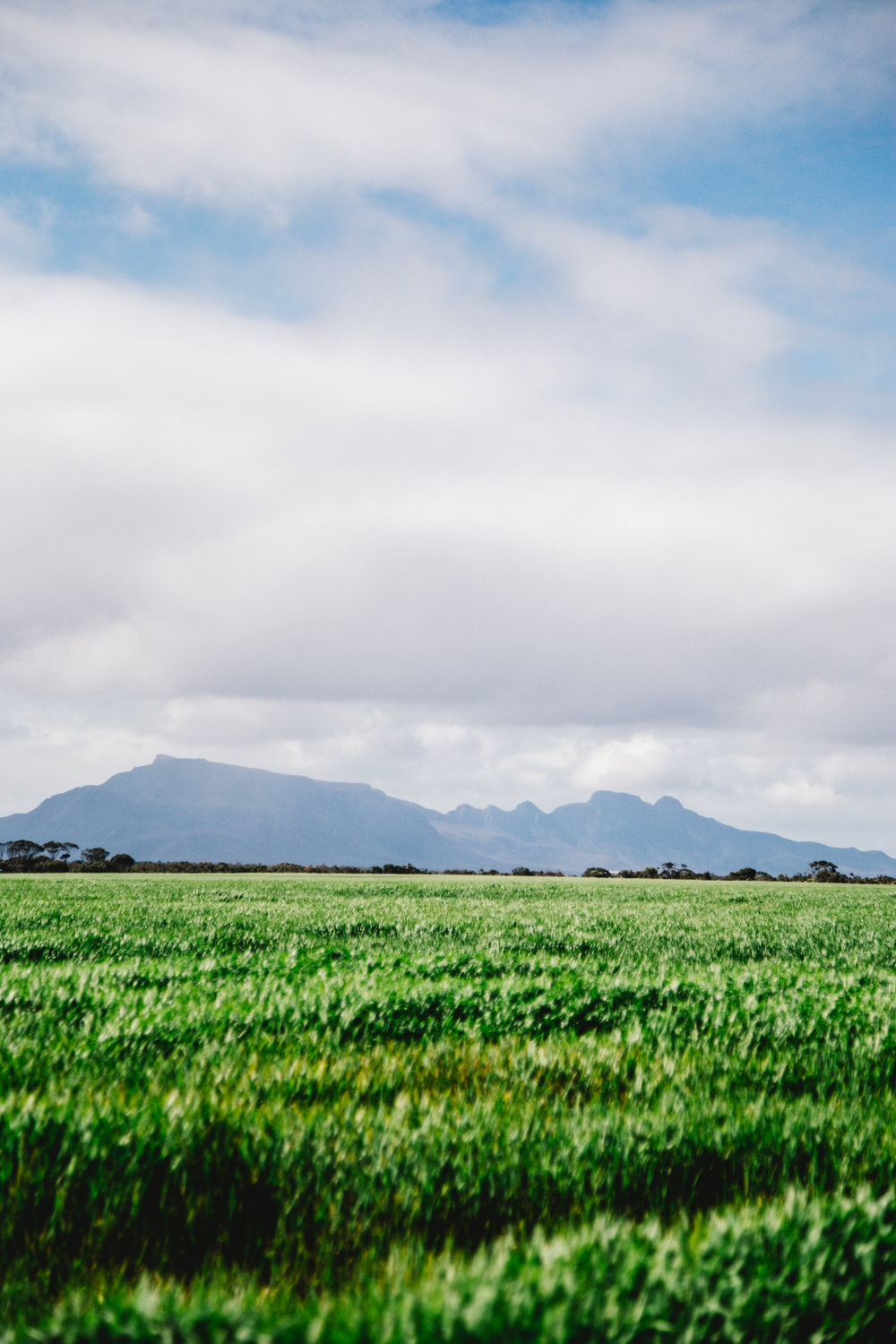 Further South Extended Collection - Stirling Range in Spring