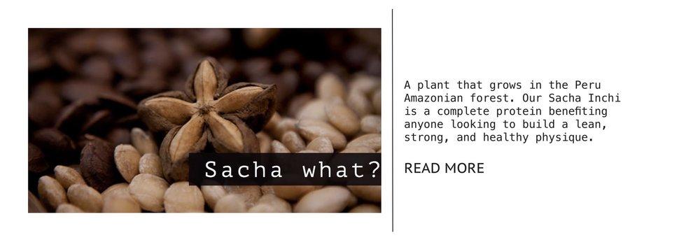 sacha+article-1.jpg