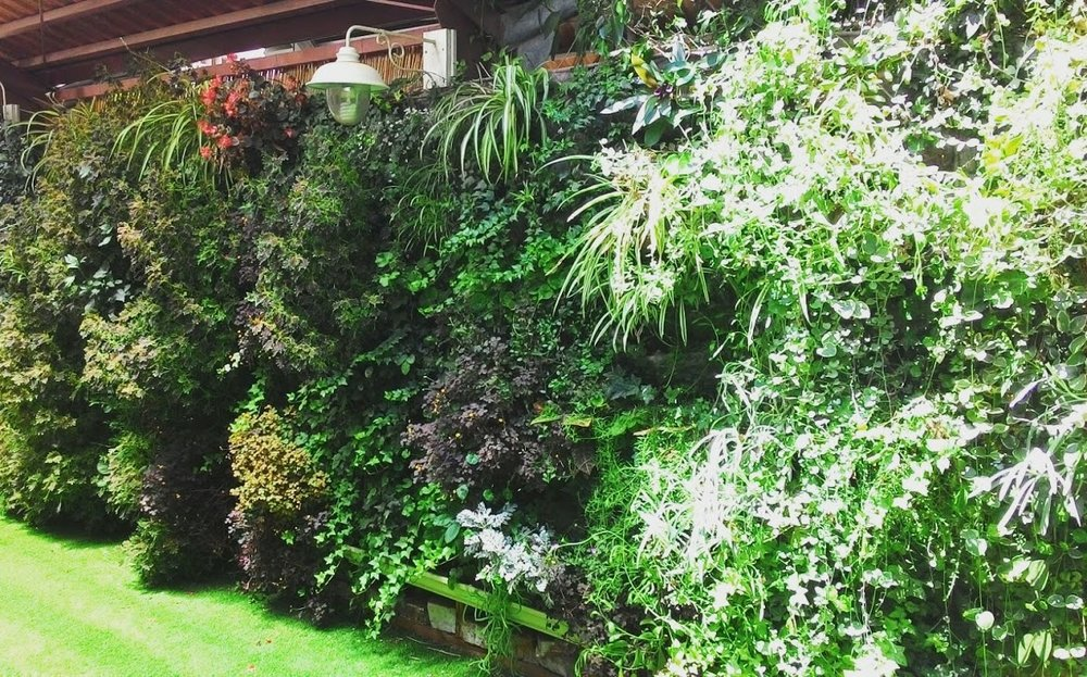 wall garden vivacity .jpg
