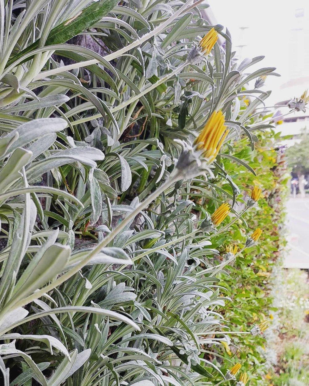 vicacity wall garden 3.jpg