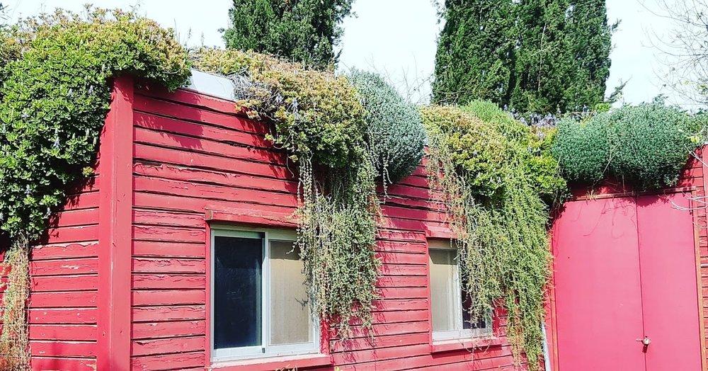 green roof vivacity .jpg