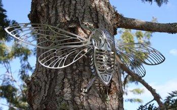Cicada-2.JPG