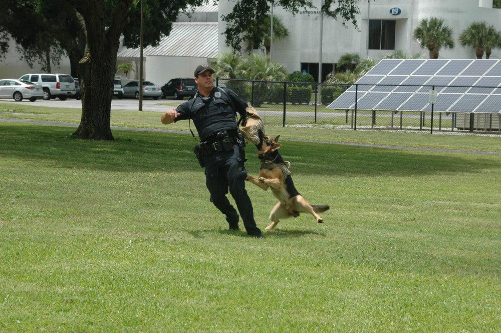 Hardest Dog/Fastest Dog -