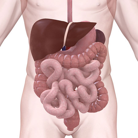 Colon Cancer Screening -