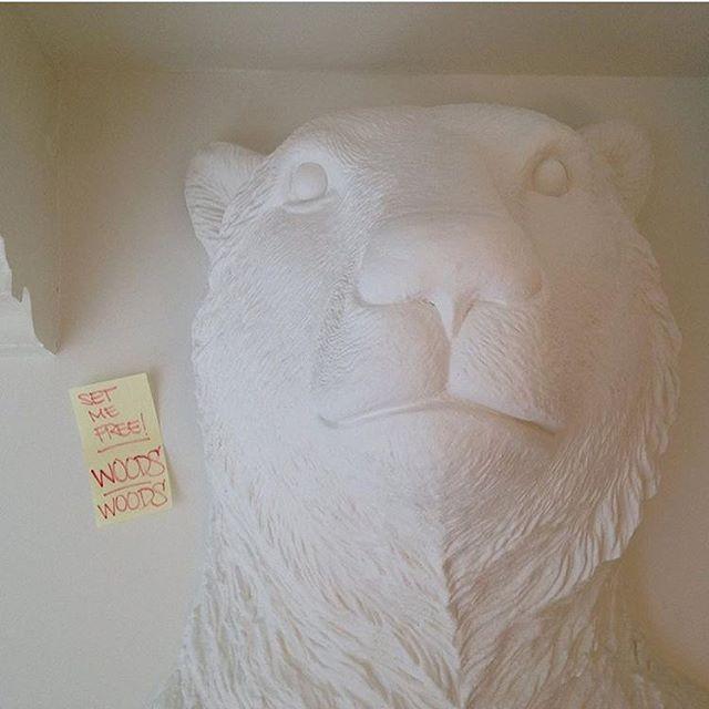 Set me free!!!🐻 . . . #polarbear #westerlab #amsterdam #creative #westerstraat #jordaan #studio #creationspace
