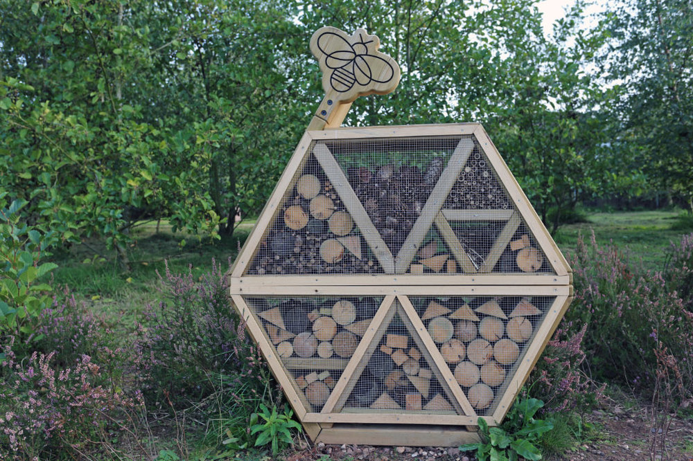 Our bug hotel is just one part of this area