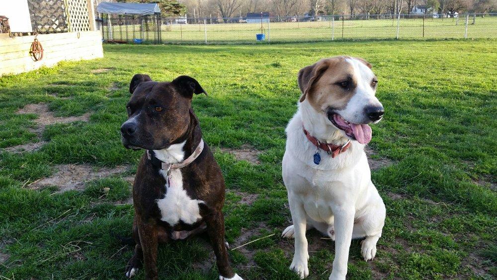 2 dog friends.jpg