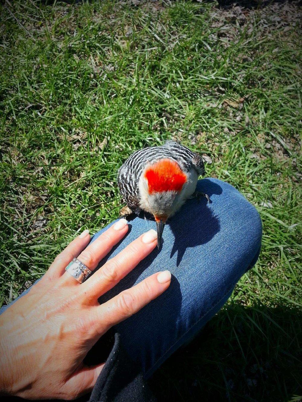 woodpeckerfriend.jpg