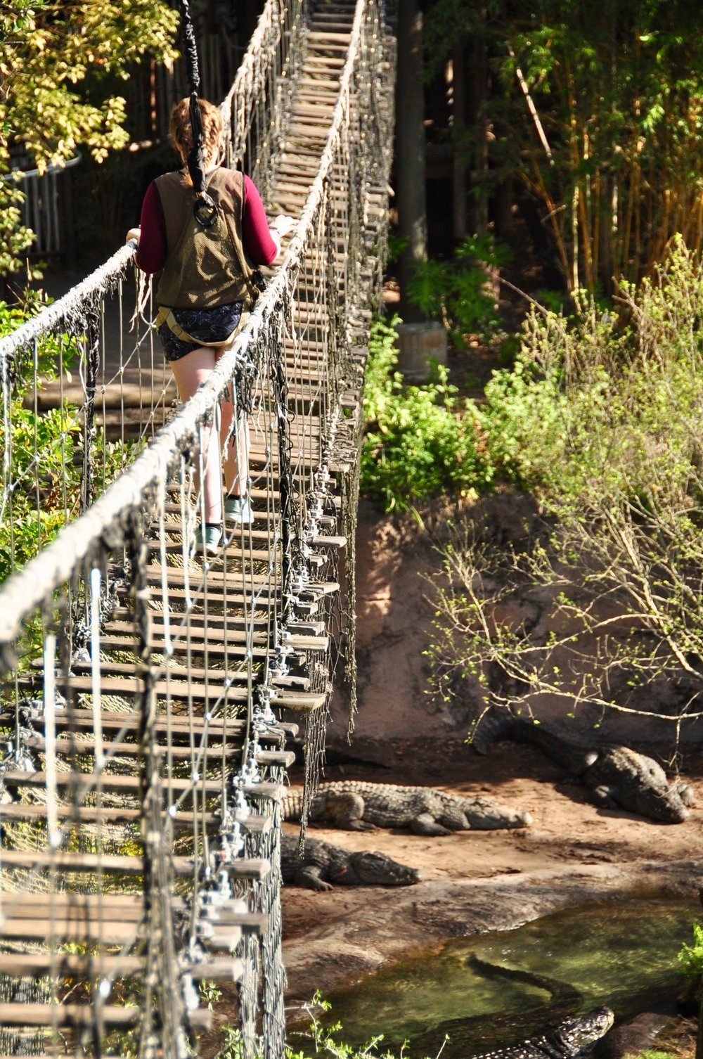 Behind-The-Scenes Tour at Disney World - Wild Africa Trek - Rope Bridge over Crocodiles - How to Make the Most of Disney Theme Parks as an Adult
