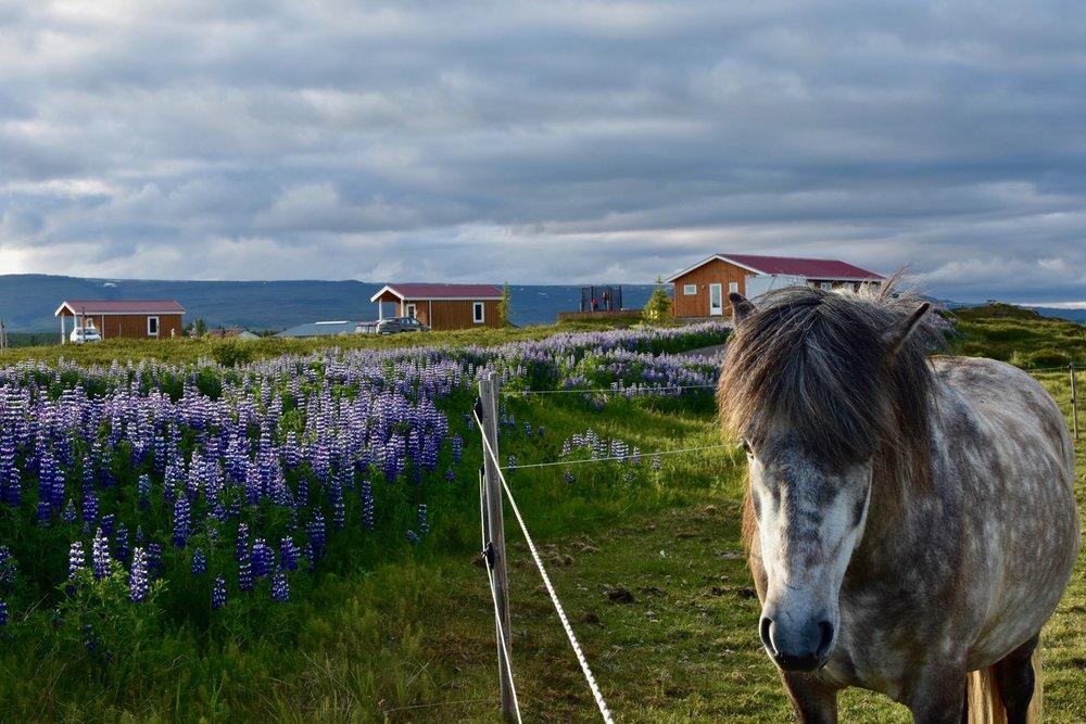 Stormur Cottages - East Iceland