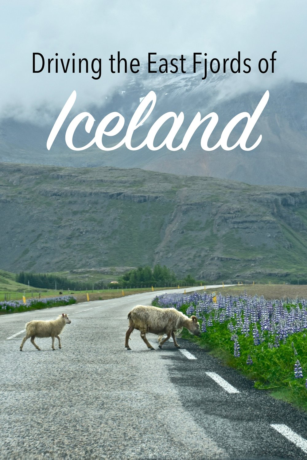 Our third day driving Iceland's Ring Road along the East Fjords.  Going from Hofn to Egilsstadir, we saw fjords, one of the highest waterfalls, cute villages, and black sand beaches. #Iceland #Travel #RingRoad #Höfn #RoadTrip #Fjords #EastFjords
