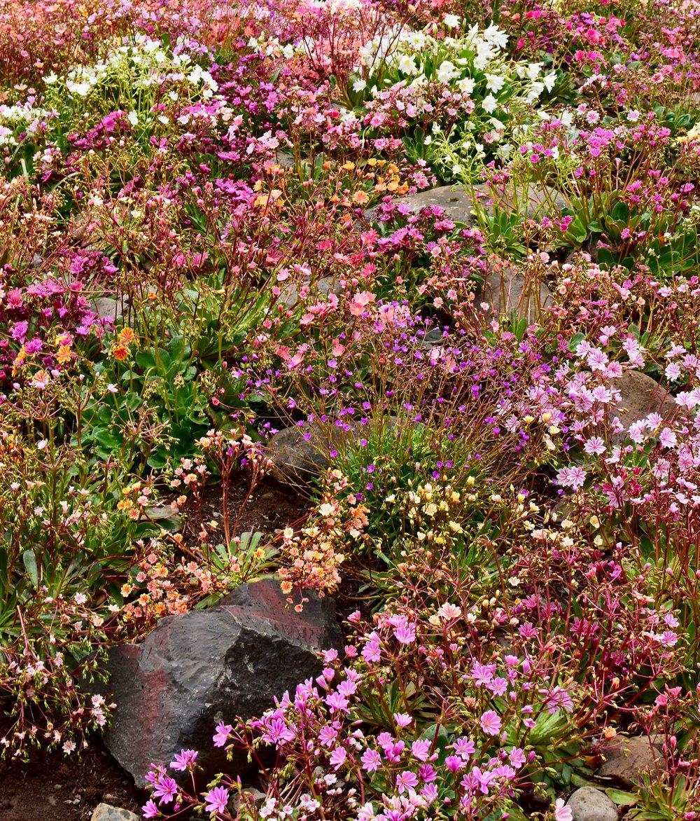 Akureyri Botanical Garden - Lystigardurinn