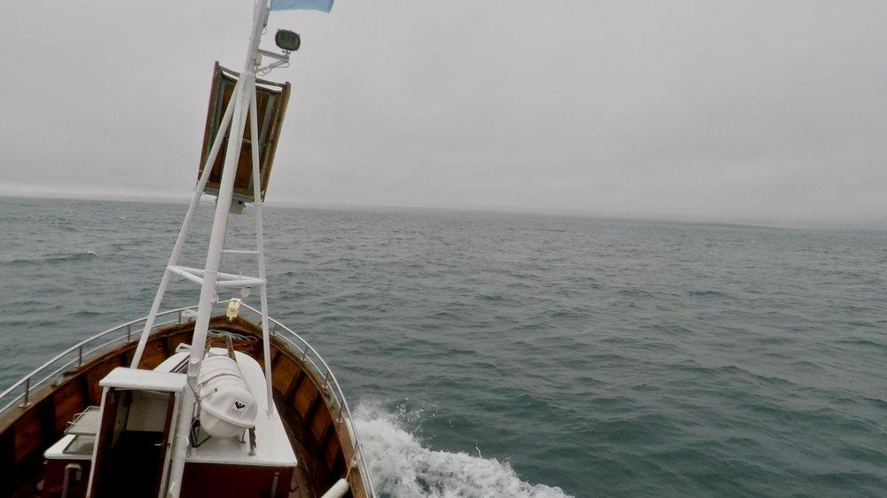Whale Watching in Húsavík, Iceland - Best Summer Adventure Activities