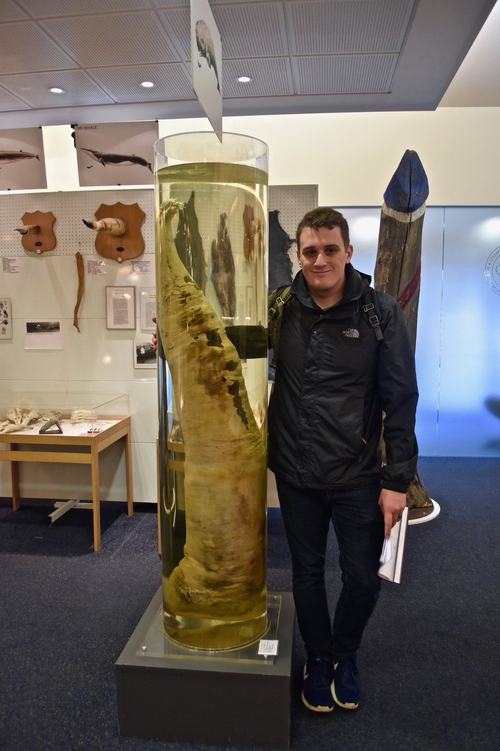 The Icelandic Phallological Museum in Reykjavik, Iceland