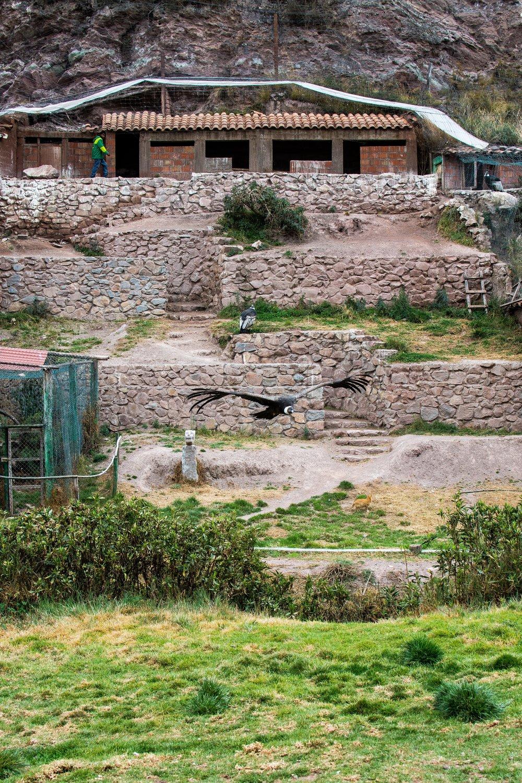 Cochahuasi Animal Sanctuary